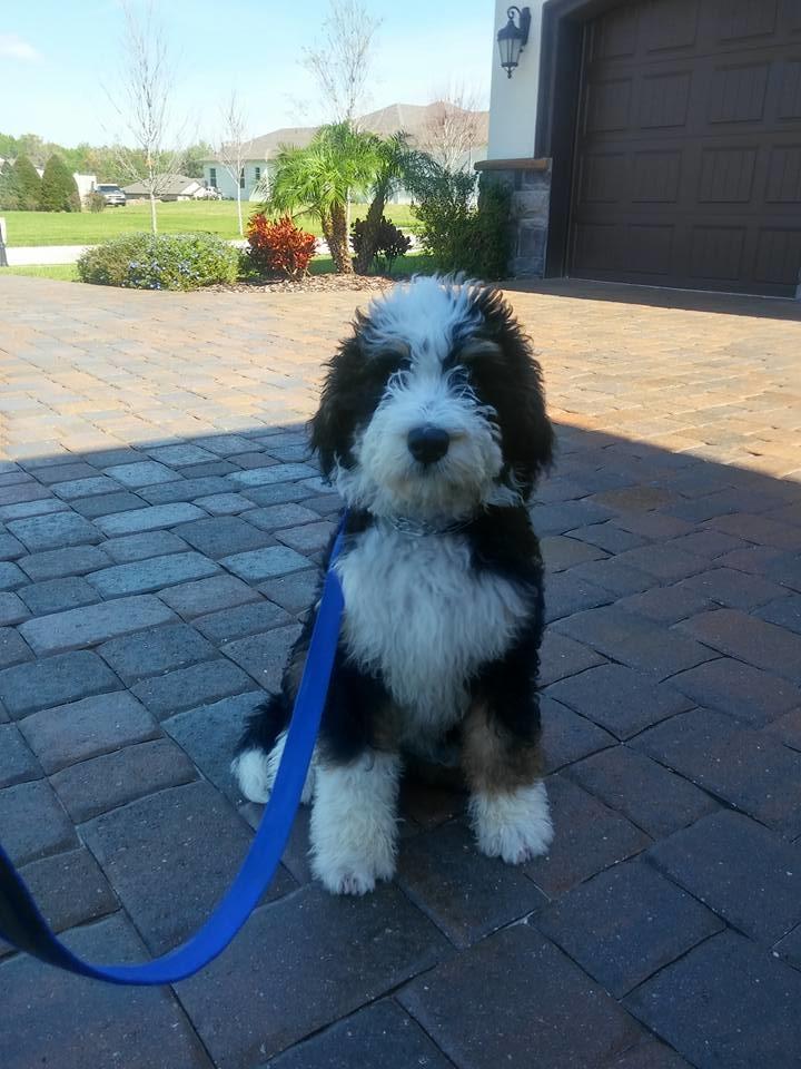The Dog Man - Pro Dog Training image 10