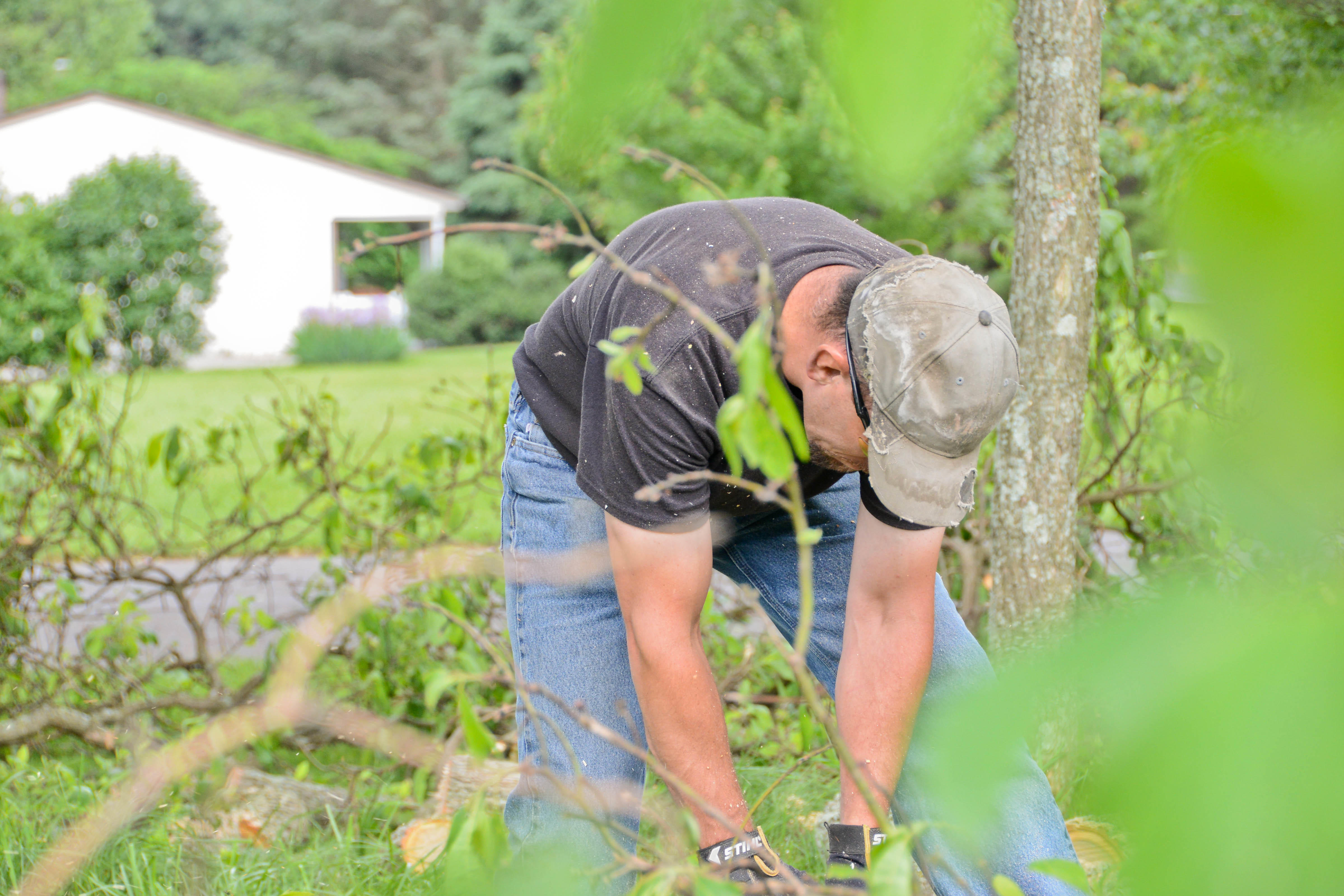 No Sweat Lawns & Trees, LLC image 2