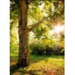 Asplundh's Trees Specialist Inc