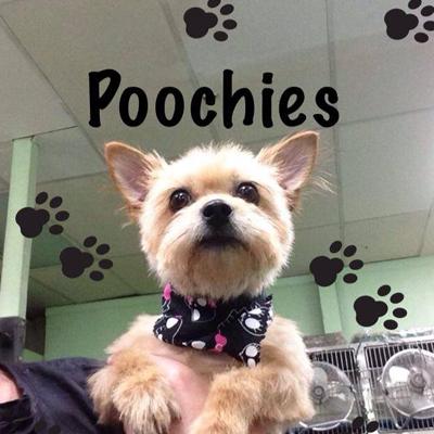 Poochie's Pet Club
