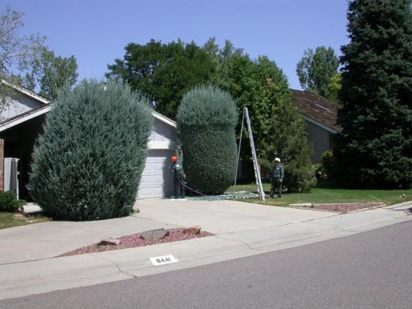 Swingle Lawn, Tree & Landscape Care image 13