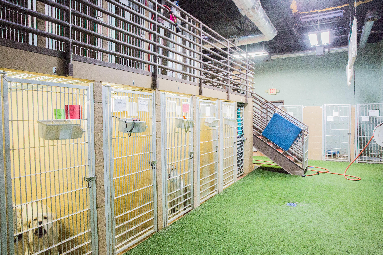 St. Francis Animal Hospital and Pet Resort image 5