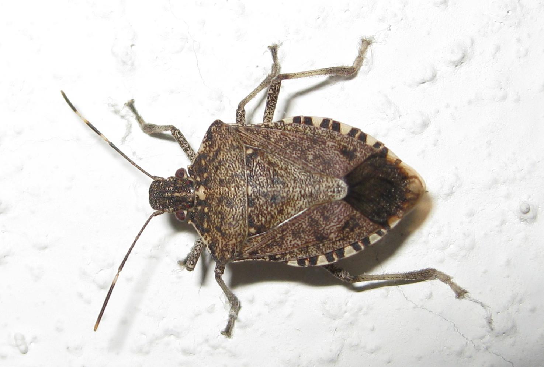 MNR Pest Solutions, Inc. image 2