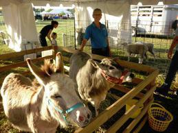 Beach Party Ponies & Barnyard Petting Zoo image 3