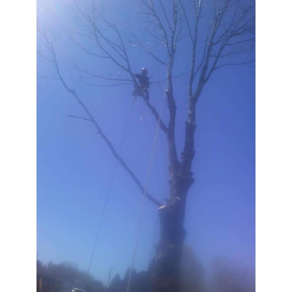 Losing Limbs Tree Service