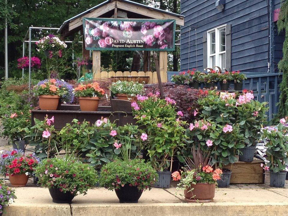 blue tree garden center 12 photos stores norristown pa reviews