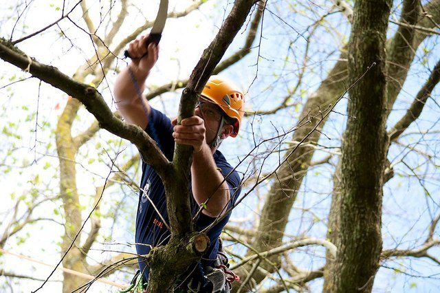 New York Long Island Tree Service image 1