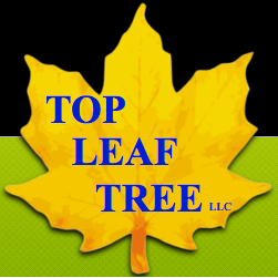 Top Leaf Tree LLC - Raymond, ME 04071 - (207)712-7864 | ShowMeLocal.com
