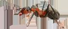 Crown Exterminators image 0
