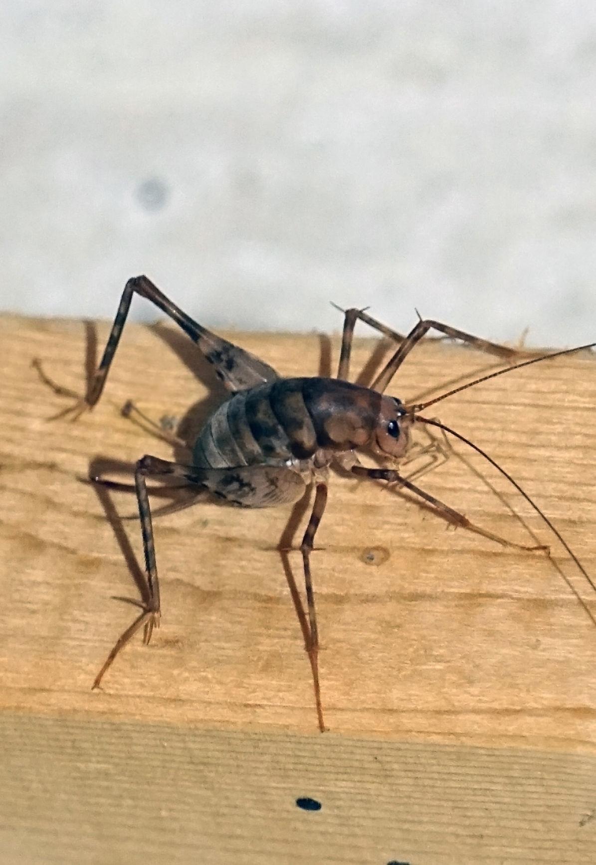 1 'Til Done Pest Control image 3