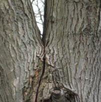 G E Tree Service Inc image 3