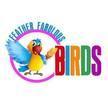 Feather Fabulous Birds image 0