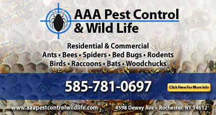AAA Pest Control & Wild Life image 0