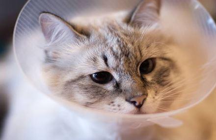 La Granjita clinica veterinaria