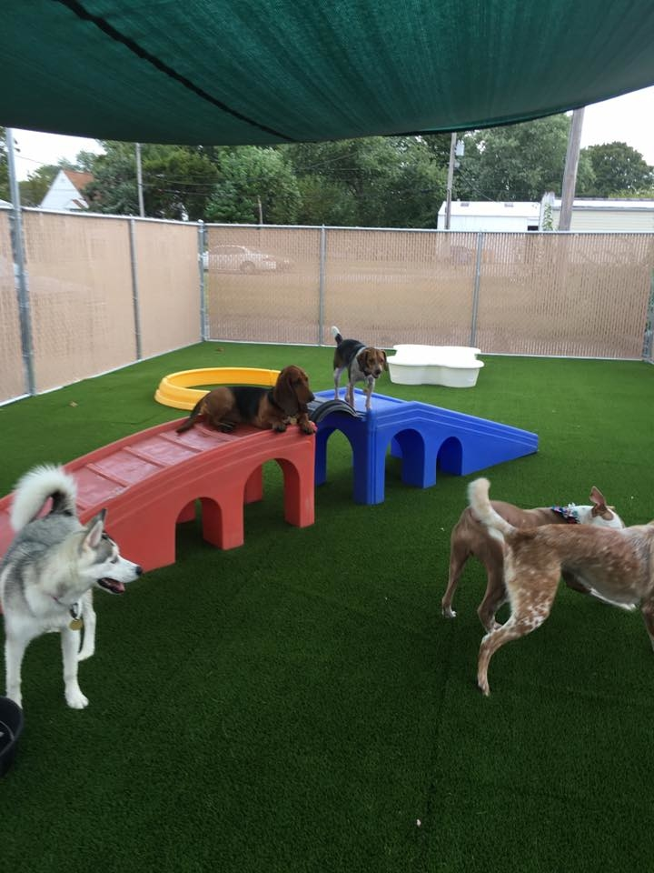 Jagger's Doggie Daycare, Dog Grooming, Training & Boarding image 5