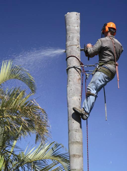 Garcia Amigo Tree Service image 2