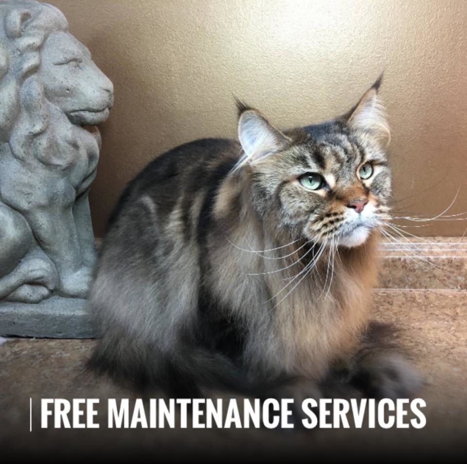 The Main Lion Cat Grooming Salon Cat Groomer Pet