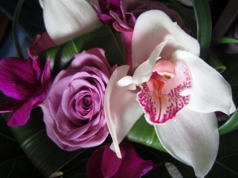 Fleuricado Inc à Saint-Marc-des-Carrières