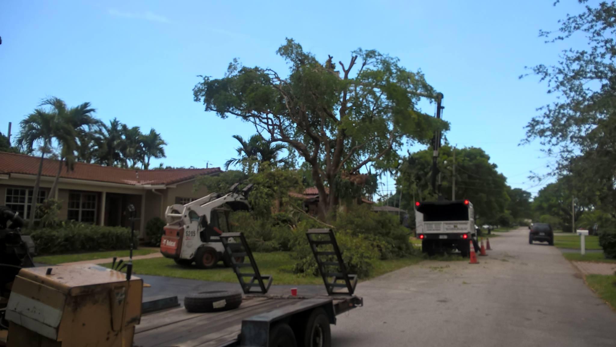 Sunshine Tree Trimming image 3