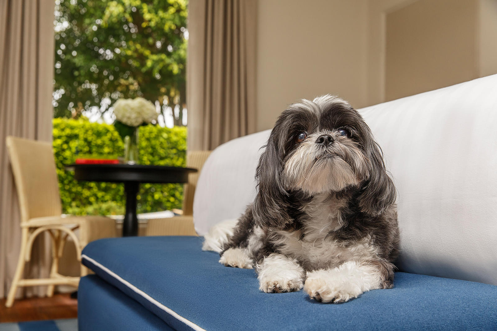 Dog Friendly Hotel Near Santa Barbara Ca