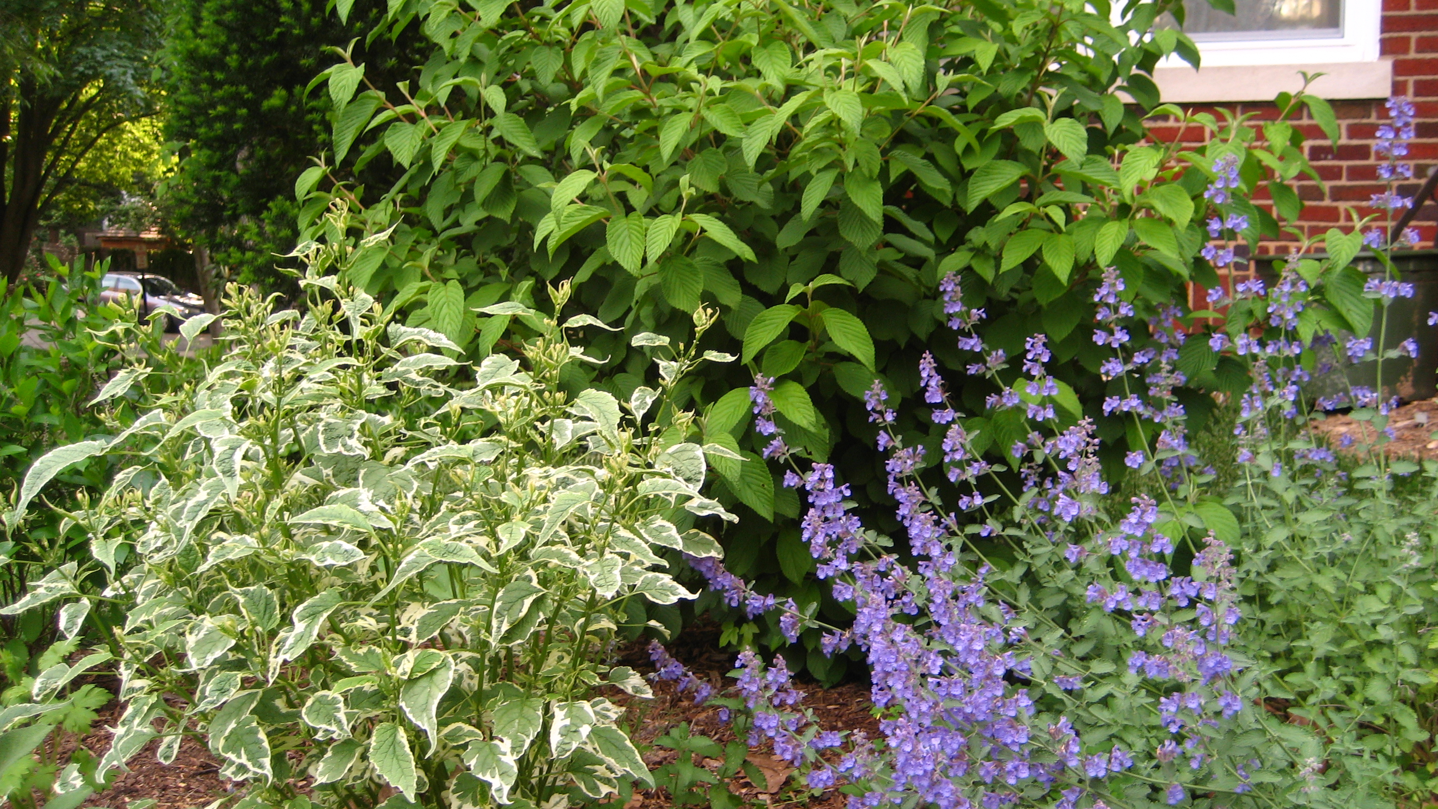 Gardening and gentle redesign llc in chevy chase md 20815 for Garden redesign