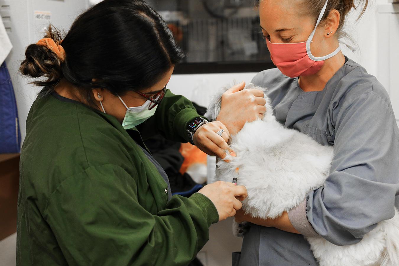 VCA Animal Hospital of Los Gatos