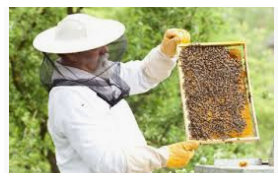 A1 Pest Killers & BEE Removals