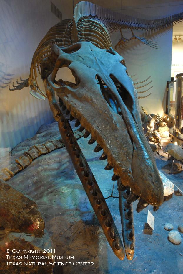 Ut Austin Natural History Museum