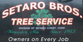 Setaro Bros Tree Service & Construction