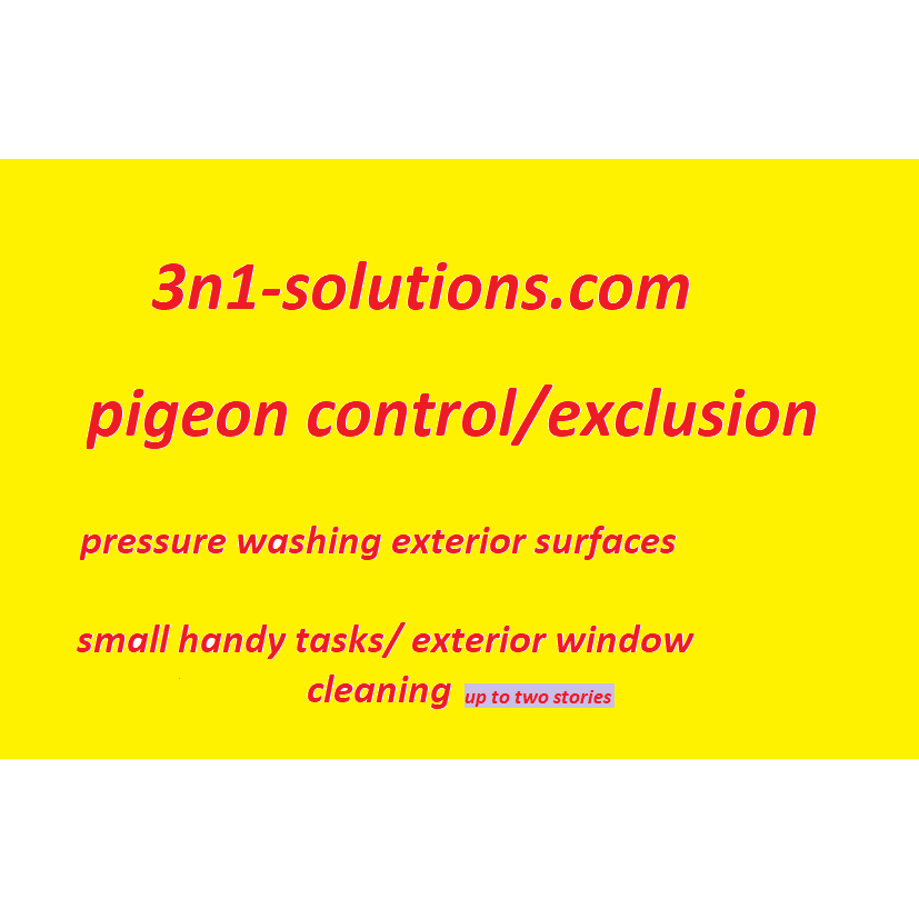 3n1 solutions