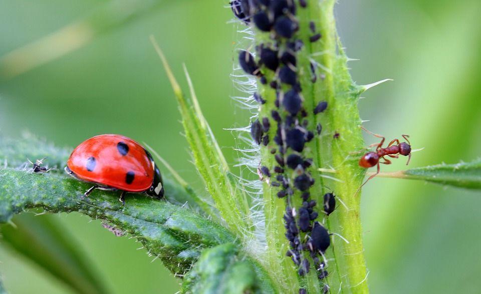 Township Pest Control