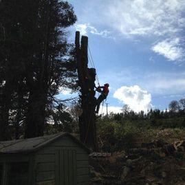 Scanlon Tree Services 3