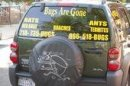 Bugs Are Gone Exterminating - Brooklyn, NY