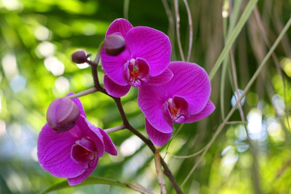 Orchid Recovery Center - ad image