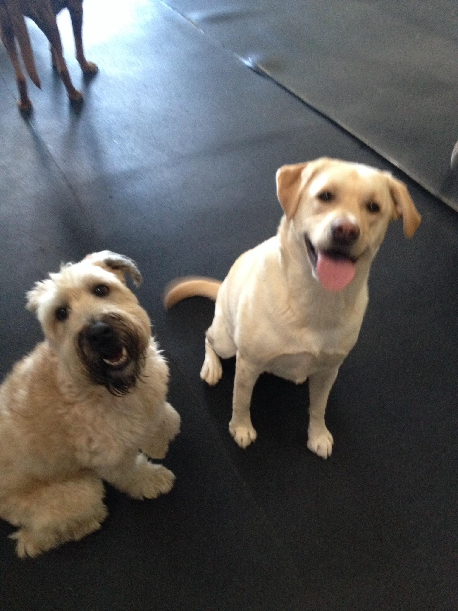 Dog Training Mchenry Illinois