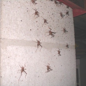 Spider and other pest exterminators