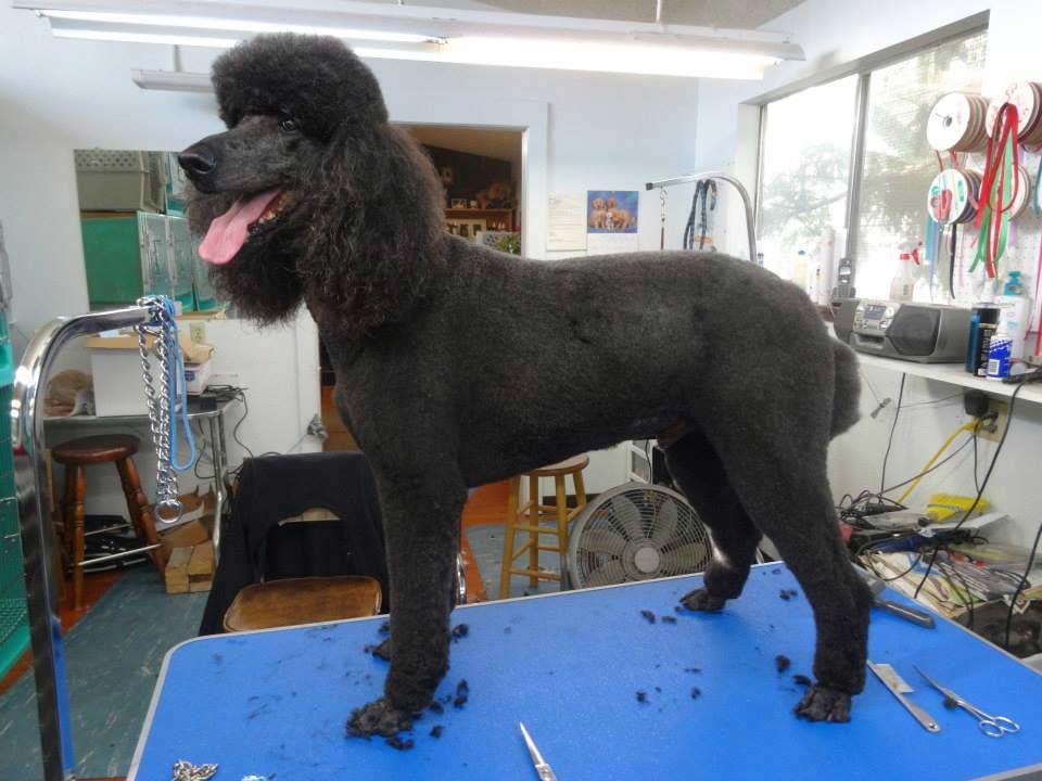 Love & Care Pet Salon