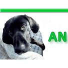 Animal Medicine & Surgery - Little Neck, NY - Veterinarians