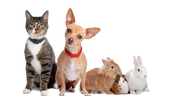 Eläinlääkäripalvelu LoppiVet