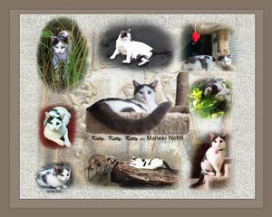 Kitten's History Place-mat