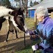 Horses for Healing - Coward, SC - Sports Instruction