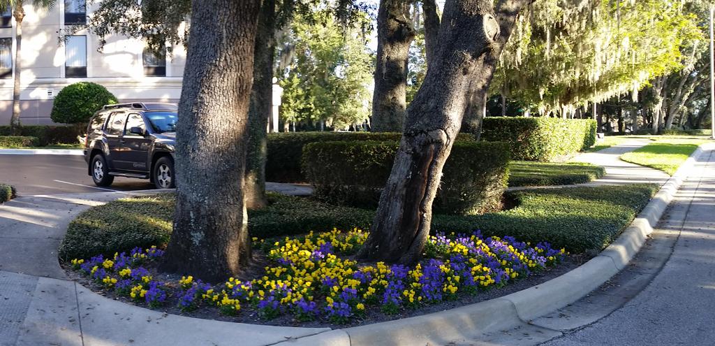 Ds Landscape Maintenance Casselberry Florida Fl