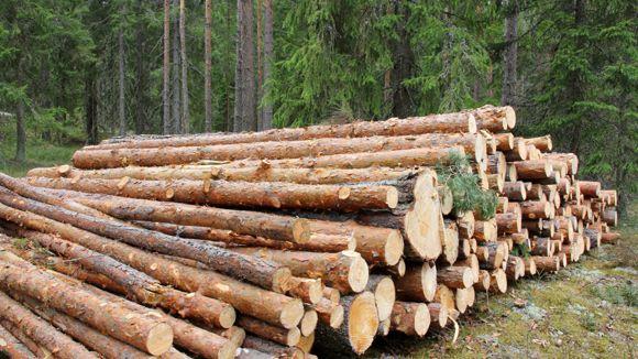 Metsänhoitoyhdistys Uusimaa ry Orimattila
