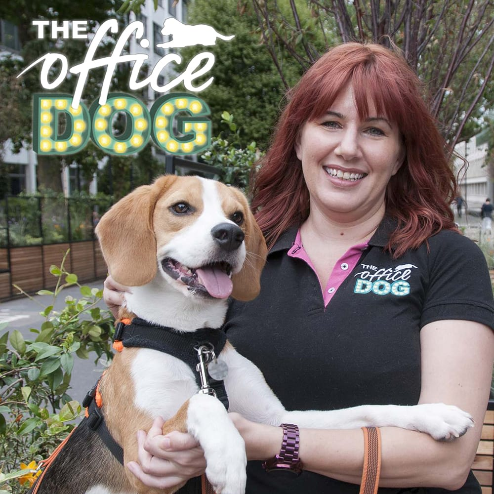 The Office Dog - London, London W6 0NJ - 020 3488 3581 | ShowMeLocal.com