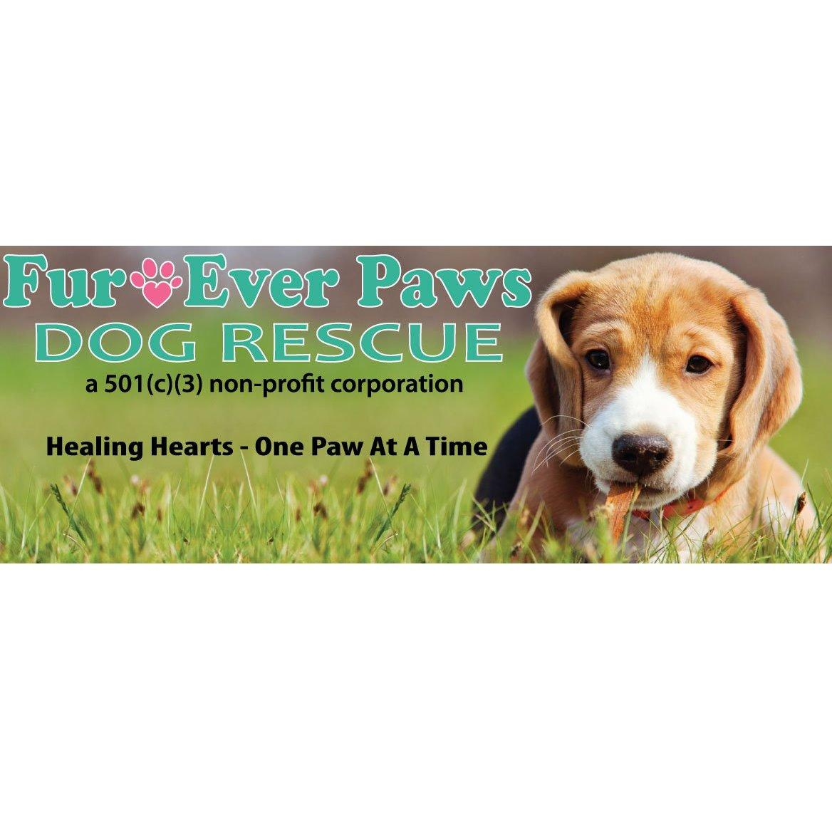 Dog Rescue Newark
