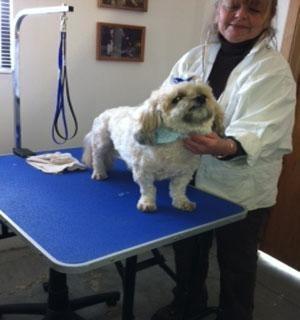 Daly Dog Care - ad image