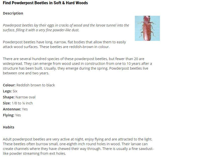Pest Detective Ltd in North Vancouver: Powderpost Beetles in Soft & Hard Woods