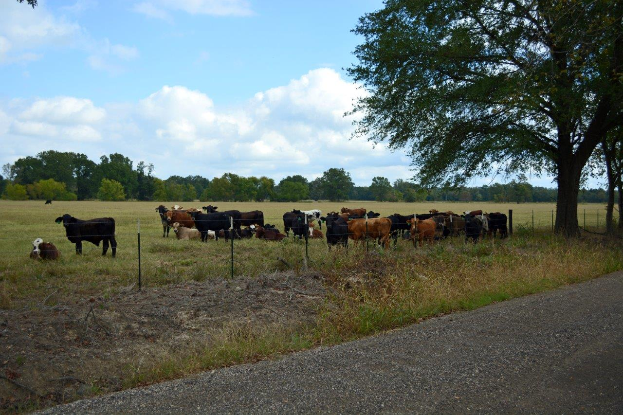 Southwest ranch farm sales mckinney texas tx for South west ranch