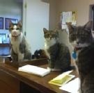 Faithful Friends Pet Cemetery - Office Greeters!