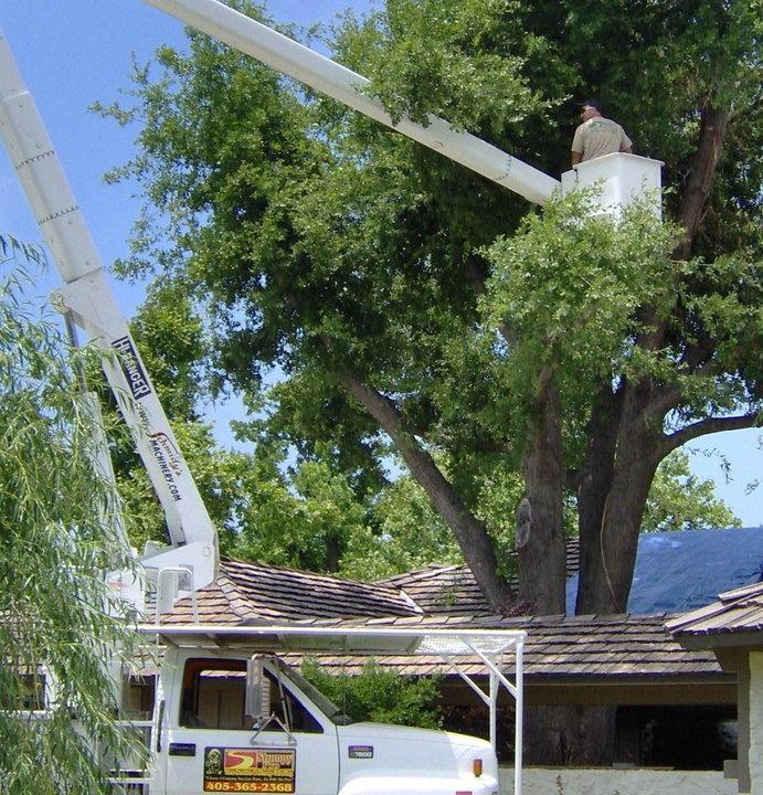 Stumpy Pro Tree Services & Stump Grinding